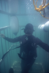 Observing the white shark from within a shark cage is an unforgettable experience and the optimal diving method we use during the Great White Shark Awareness Diver Distinctive Specialty Course.